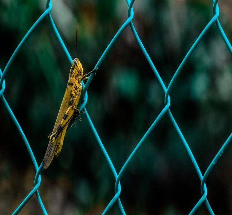 koliko gubitak kilograma cvrčka zdravi prirodni dodaci za mršavljenje