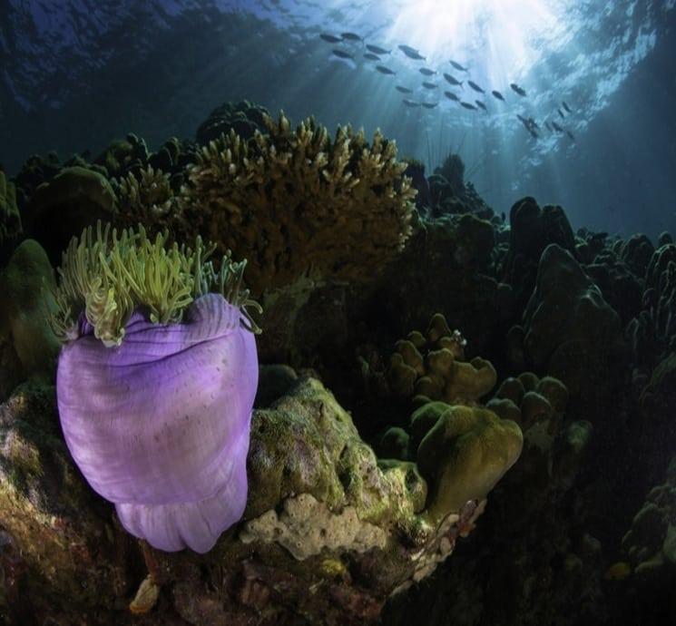 10 činjenica o okeanima