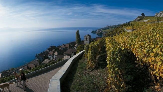 Vaud vino