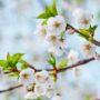 alergija proljeće cvjetanje